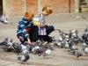 Taubenfüttern auf dem Langen Markt